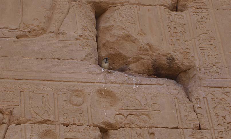 Vogel an den Außenwänden des Dendera-Tempels