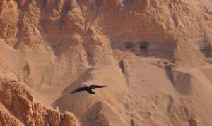Gräber und eine Krähe