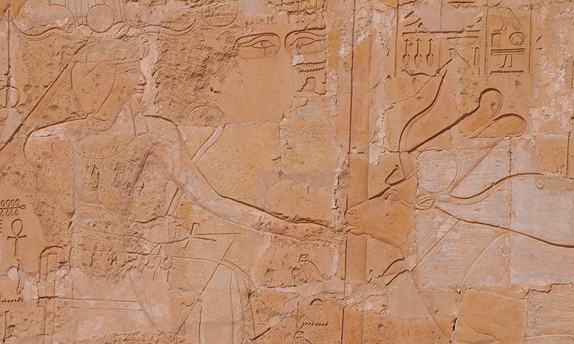 Die Göttin Hathor als Kuh leckt die Hand der Königin Hatschepsut Tempel von Deir el Bahari Neues Reich, 18. Dynastie